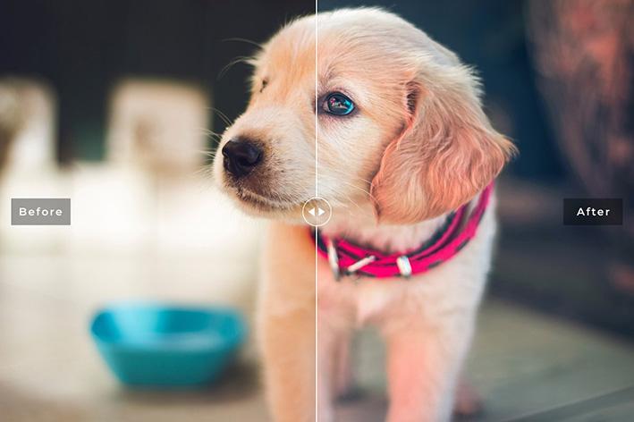 دانلود 11 پریست سینمایی لایت روم و Camera Raw فتوشاپ : My Dog Lightroom Presets