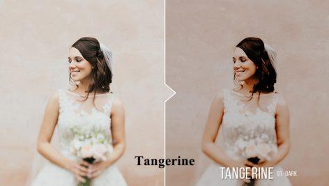 دانلود 20 پریست لایت روم : Tangerine 20 Portrait Presets for Lightroom & ACR