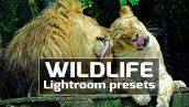 دانلود پریست لایت روم 50 عددی دسکتاپ : Wildlife Lightroom Presets