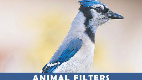 پریست لایت روم و Camera Raw و اکشن Animal Photography Lightroom Presets