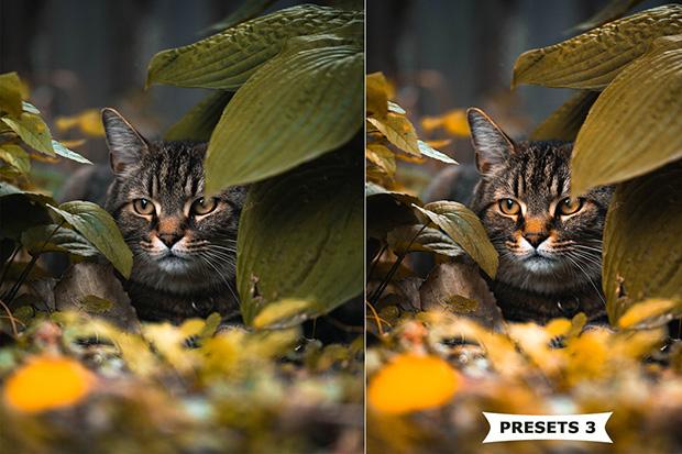 پریست لایت روم دسکتاپ و موبایل رنگ پاییزی Autumn Lightroom Presets