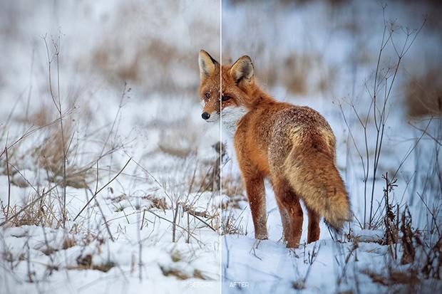 پریست لایت روم و کمرا راو  تم طبیعت Wildlife Mobile LR and ACR Presets