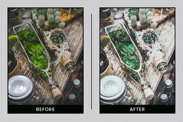 پریست لایت روم دسکتاپ و موبایل تم رنگ گیاهان Lightroom Presets Botanical Colors