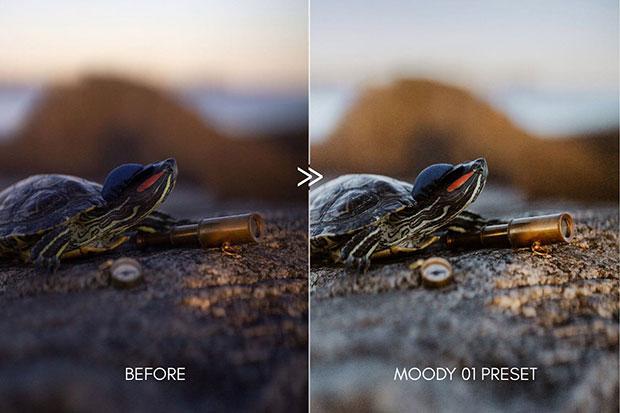 پریست لایت روم دسکتاپ و موبایل تم طبیعت Clean And Moody Film Lightroom Presets