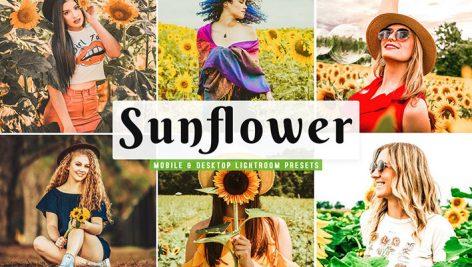 پریست لایت روم و پریست کمرا راو تم گل آفتابگردان Sunflower Lightroom Presets Pack