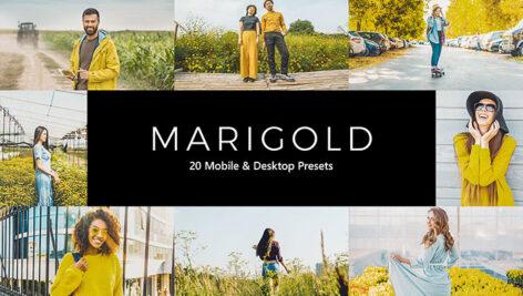 پریست لایت روم و پریست کمرا راو و لات رنگی Marigold Lightroom Presets & LUTs