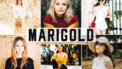 40 پریست لایت روم و کمرا راو و اکشن فتوشاپ تم بهاری Marigold Pro Lightroom Presets