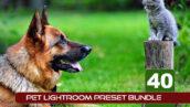 40 پریست لایت روم حرفه ای حیوانات خانگی Pet Lightroom Preset Bundle