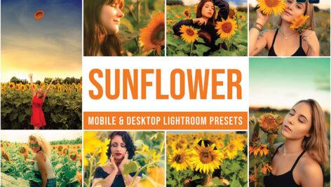 30 پریست رنگی لایت روم تم گل آفتابگردان Sunflower Lightroom Presets