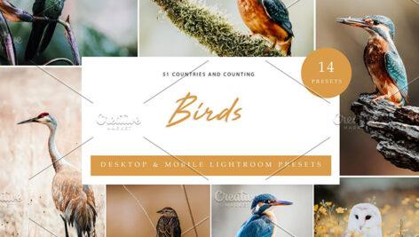 42 پریست لایت روم حرفه ای پرندگان و حیوانات Birds Lightroom Presets